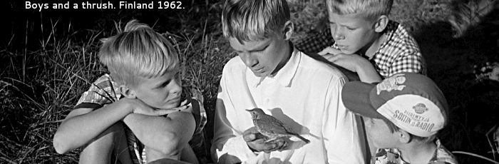 Boys and a thrush. Finland 1962.