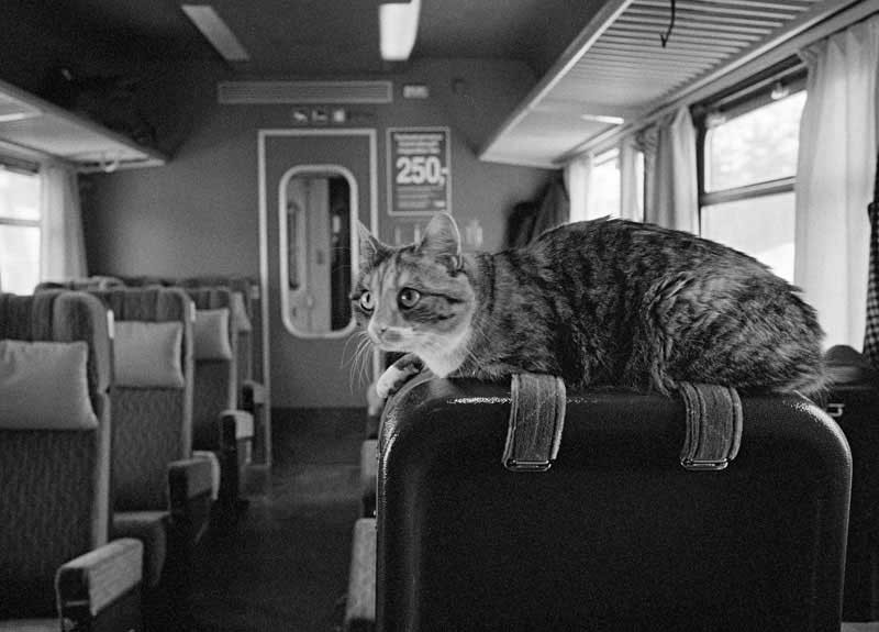 Cat in a train
