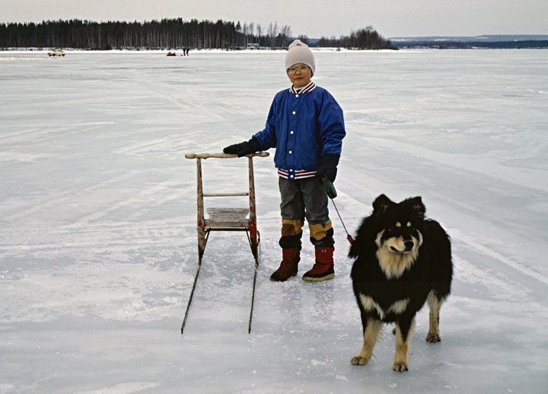A Finnish Lapphund on a lake
